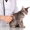 Ветеринарные клиники в Кизляре